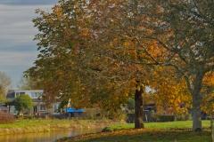 herfst 2012 _5888 Hoornaar-Marjolein