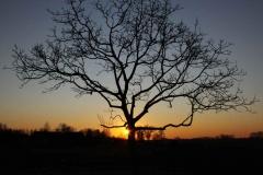 zon-onder-mijn-noten-boompje_1334 Hoornaar-Marjolein