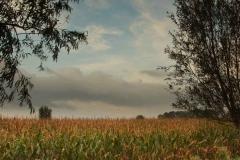 zon-op-mais-tussen-de-bomen-naar-rechts-naar-12_4872 Hoornaar-Marjolein
