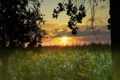 zon-tussen-de-bomen-op-de-mais-naar-12_4866 Hoornaar-Marjolein